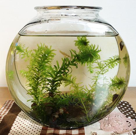 水槽ドラム金魚鉢
